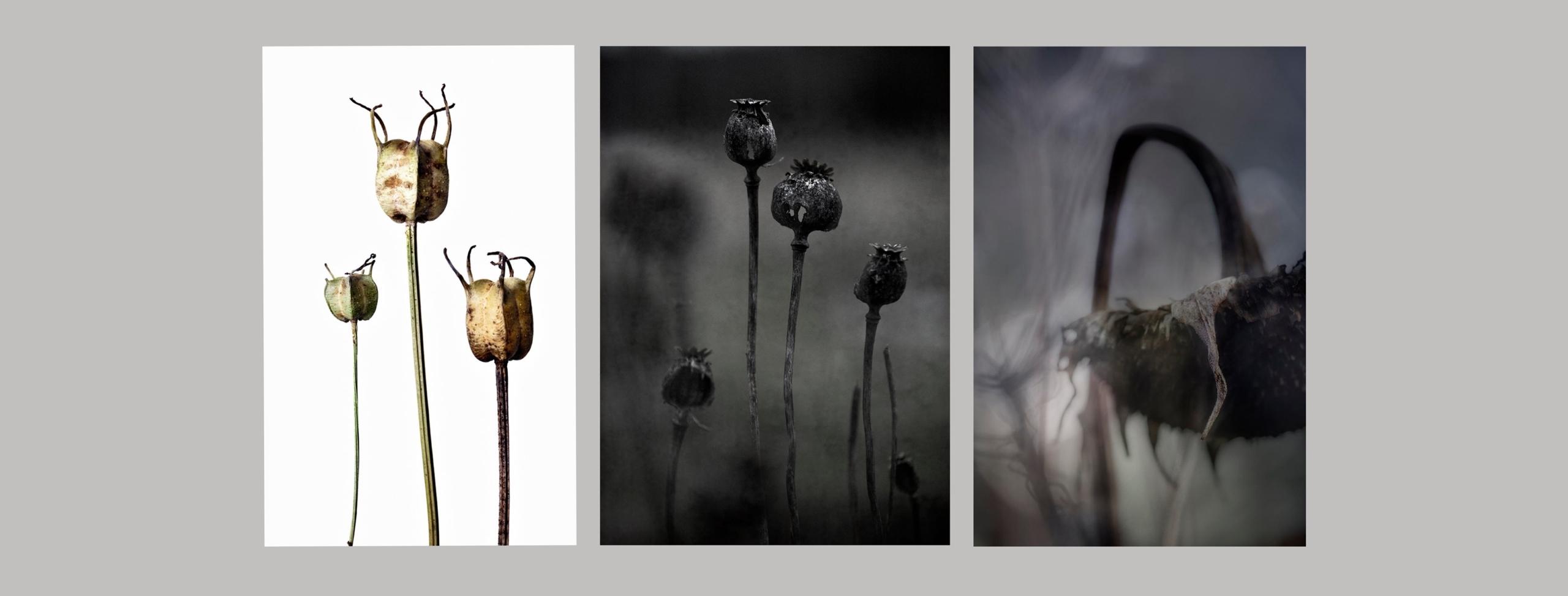 Artist talk och Workshop: Fotografi och växtlighet med Lena Granefelt