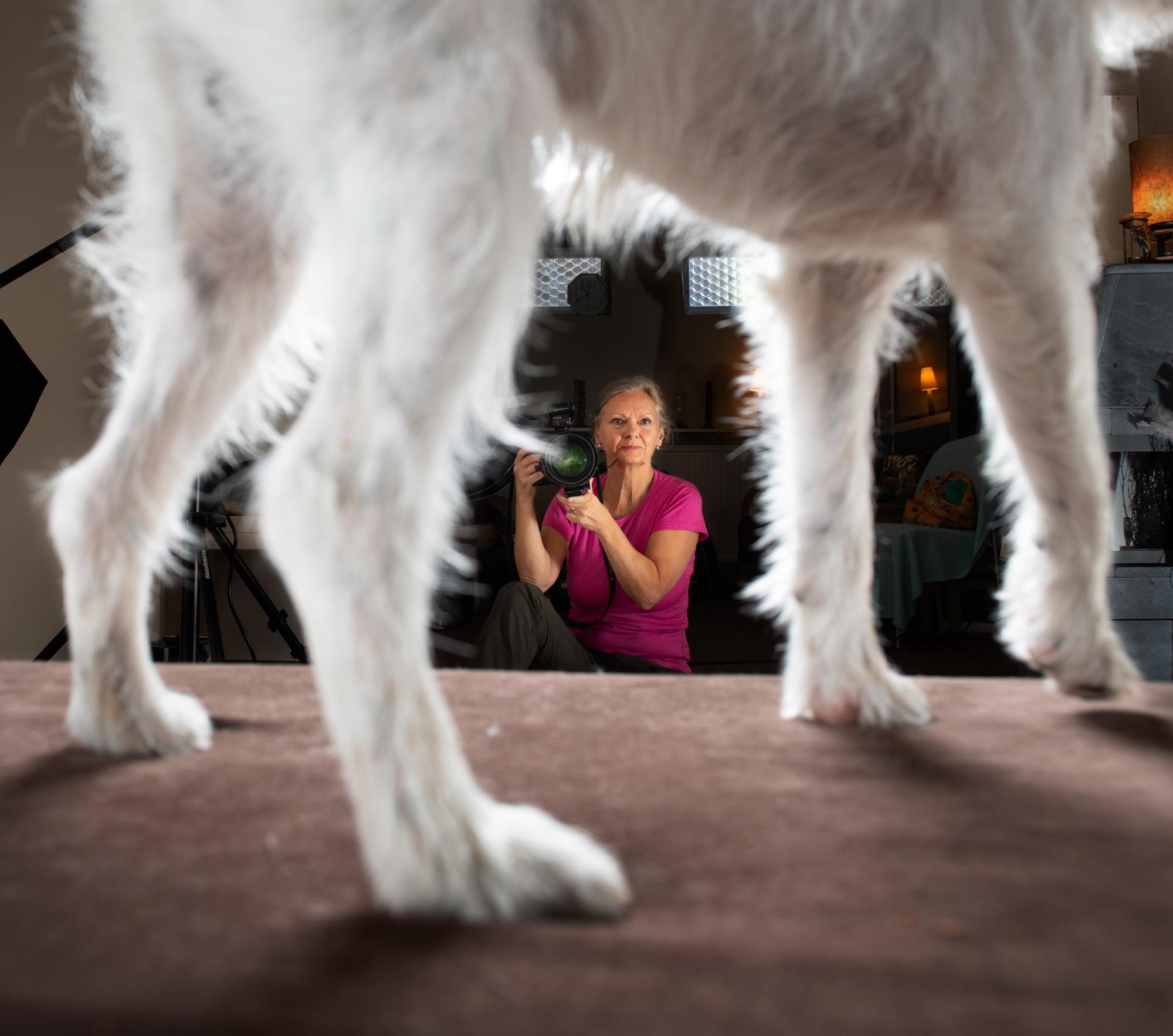 På jobbet med hundfotografen