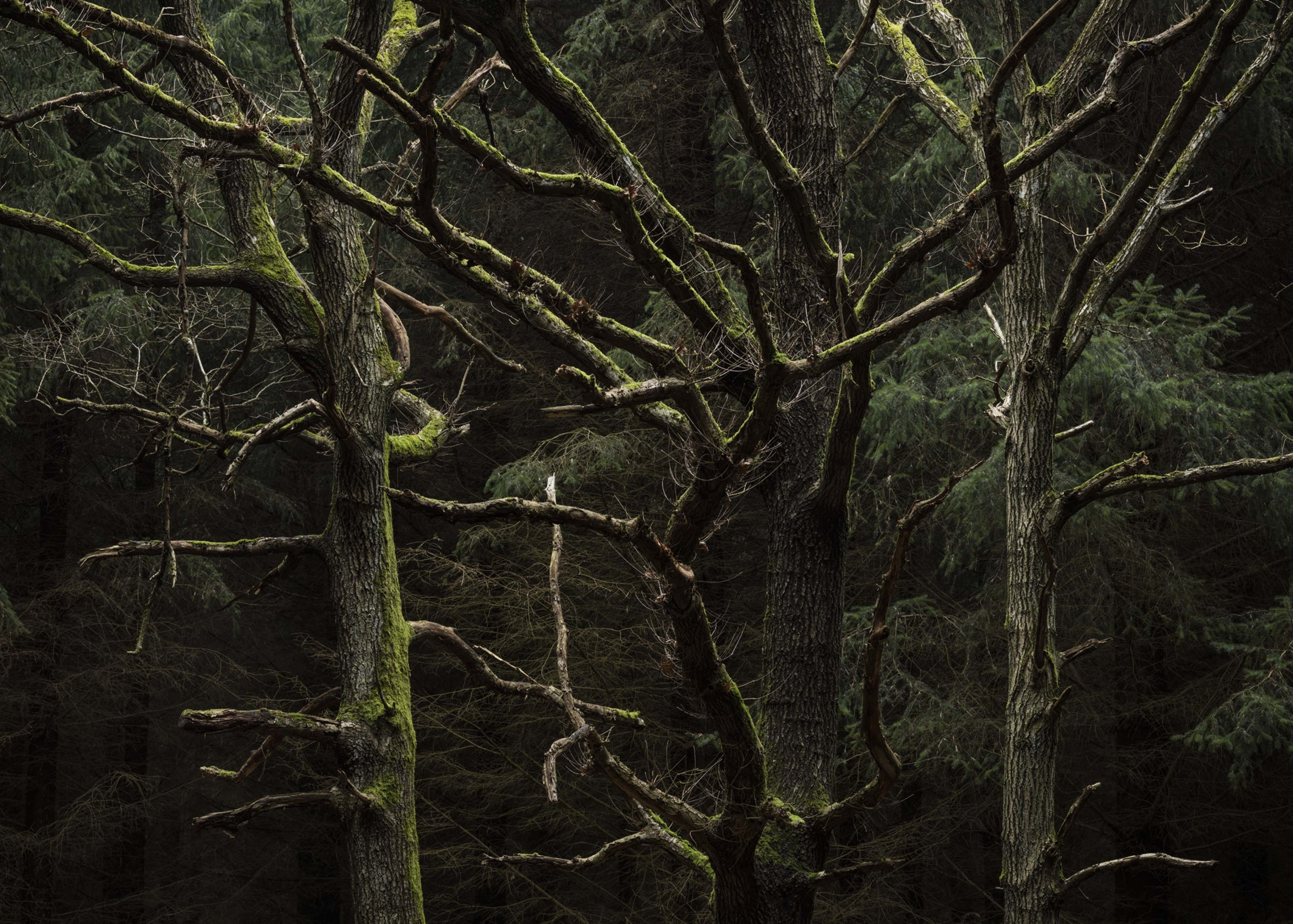 Skogspromenad med konstnärer och fotografer
